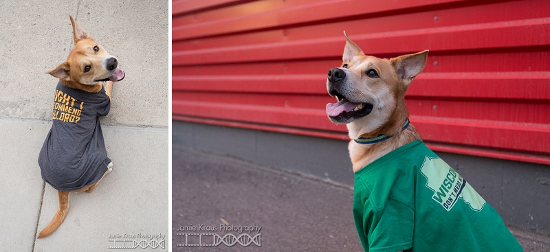 dogs wearing shirts